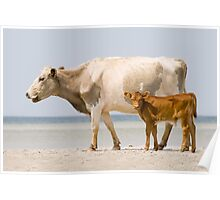 """Sea Cows"" - wild cows on Cedar Island, NC Poster"
