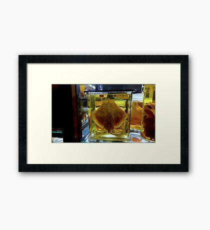 Unhappy Flatfish Framed Print