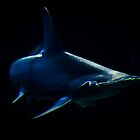 """Deep Blue"" - Hammerhead Shark by Sophie Lapsley"