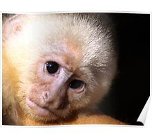 Also monkeys do cry Poster