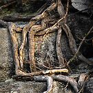 Square root by triciamary