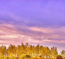 """""""Magnuson Sunset"""" by Whitney Mason"""
