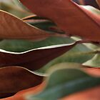 Bi-colored Leaves by Lynn Wiles