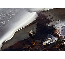 Ice, Branch and Leaves Photographic Print
