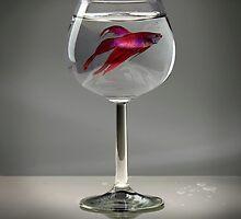 Fishy by Byron Taylor