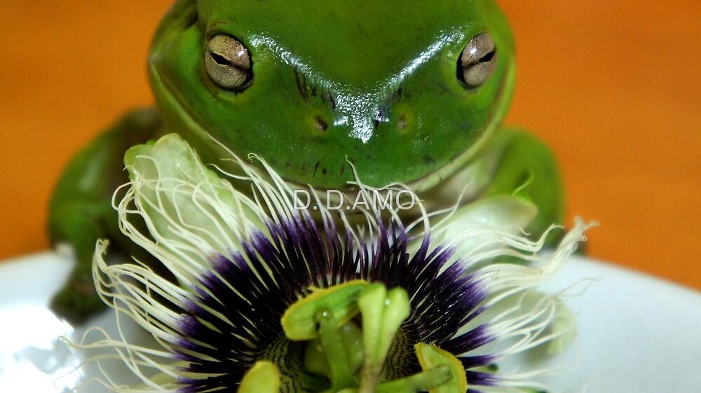 I LOVE Passiflora! by D. D.AMO