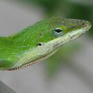 Green Anolis Lizard Head by JeffeeArt4u