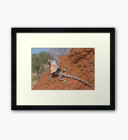 Frilled Lizard Framed Print