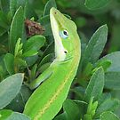 Anolis Carolinensis Lizards-Do You Have any in TN? by JeffeeArt4u