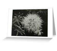 Dandelion Weed Greeting Card