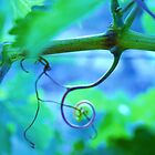 Spiral Vineyard Vine by ANNA MCALISTER