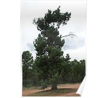 Dragon Tree Untouched Poster