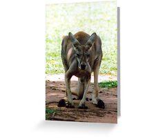 Kangaroo Greeting Card