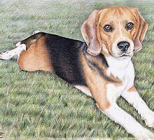 Beagle Portrait by Nicole Zeug