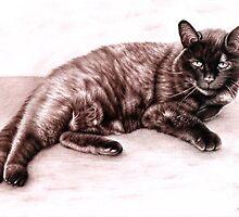 The Cat by Nicole Zeug