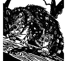 Australian Endangered Spotted-tail Quoll Lino Print Photographic Print
