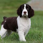 Abbey @ 13 weeks by Rob Lavoie