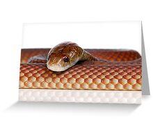 Mulga or King Brown Snake (Pseudechis australis) Greeting Card