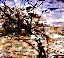 Winter colors, abstract of winter by Antanas