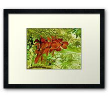 Orchids Mystery Framed Print