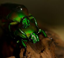 Green love bugs by Angel1965