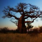 Dreamy Old Baobab by Gordito73