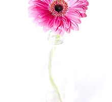 Pink Gerbera in Bottle by Nick Tsiatinis