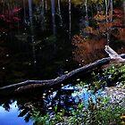 stillmedihu by Greg Owens
