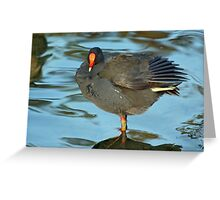 Swamp Hen Greeting Card