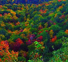 Awesome Autumn by George Cousins