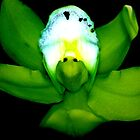 Kermie Baby: Alien Discovery: A New Perspective on Orchid Life by © Ashley Cooke