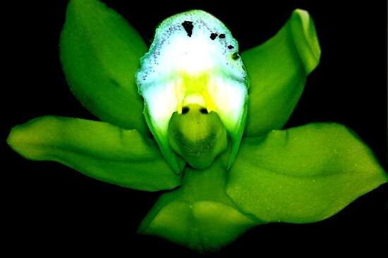 Kermie Baby: Alien Discovery: A New Perspective on Orchid Life by ©Ashley Edmonds Cooke