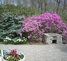 Stone Barbecue Grill overshadowed by Purple Azaleas by fionahoratio