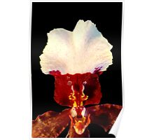 Wilson: Alien Discovery: A New Perspective on Orchid Life Poster