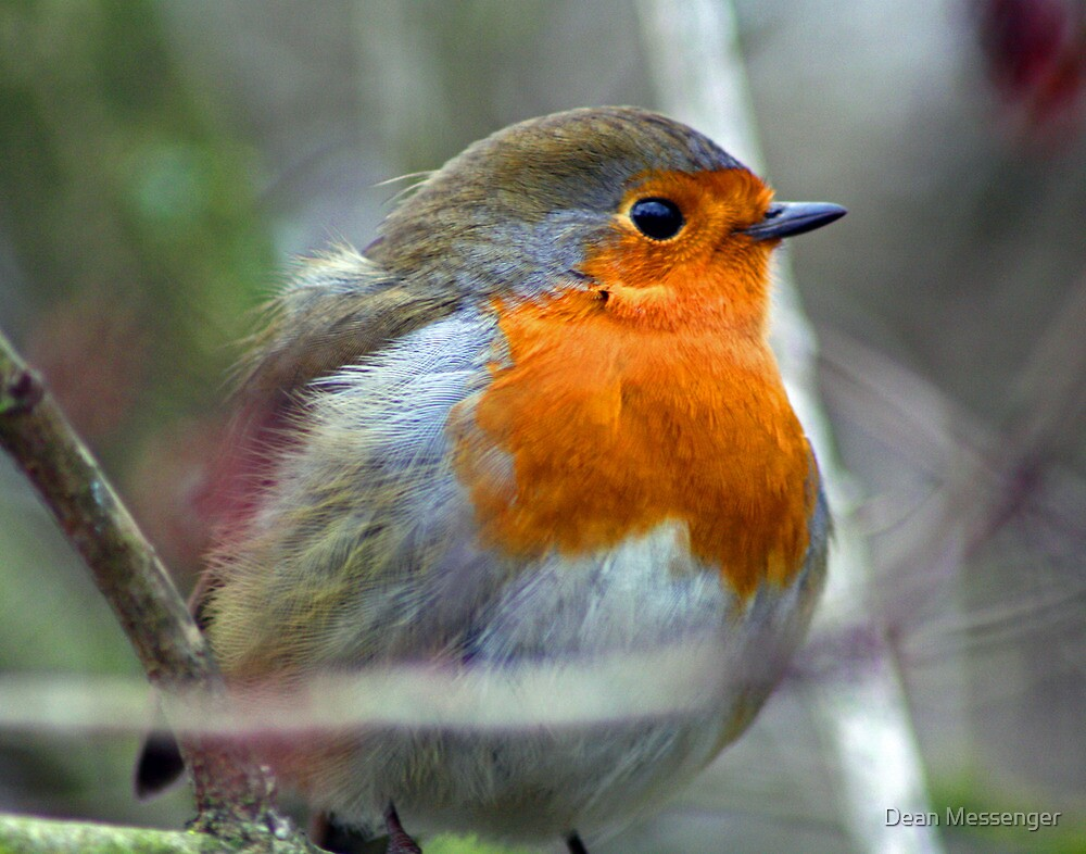 Robin Redbreast by Dean Messenger