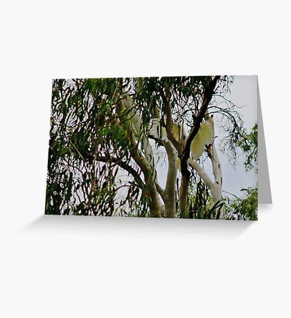 Sulphor Crested Cockatoo Greeting Card