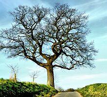 My Favourite Tree by Karen  Betts