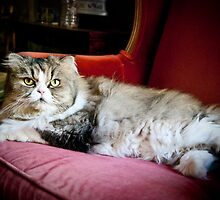 Sir Joe Cool Kitty by LisaYvonne0123