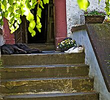 Nap in the afternoon by Uwe Rothuysen