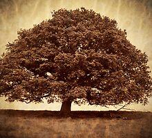 Lone Tree in field by StefanFierros