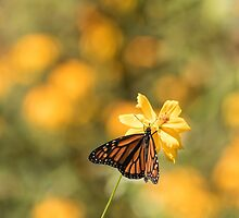 Monarch On Cosmos 1-2015 by Thomas Young