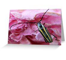 A Beetle and His Flower Greeting Card