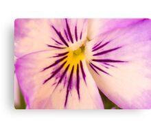 Purple And White Pansy Macro Canvas Print