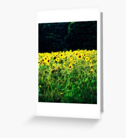 Sunflowers Galore Greeting Card