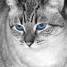 Mr. Blue Eyes by Jennifer Hulbert-Hortman