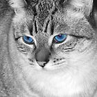Mr. Blue Eyes by Jennifer Hulbert-Hortman
