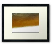 Edge Of Forest Framed Print