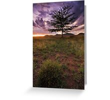 Honeylocust Tree Greeting Card