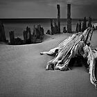 Tree stump and pilings at Kirk Park by Randall Nyhof