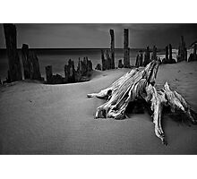 Tree stump and pilings at Kirk Park Photographic Print